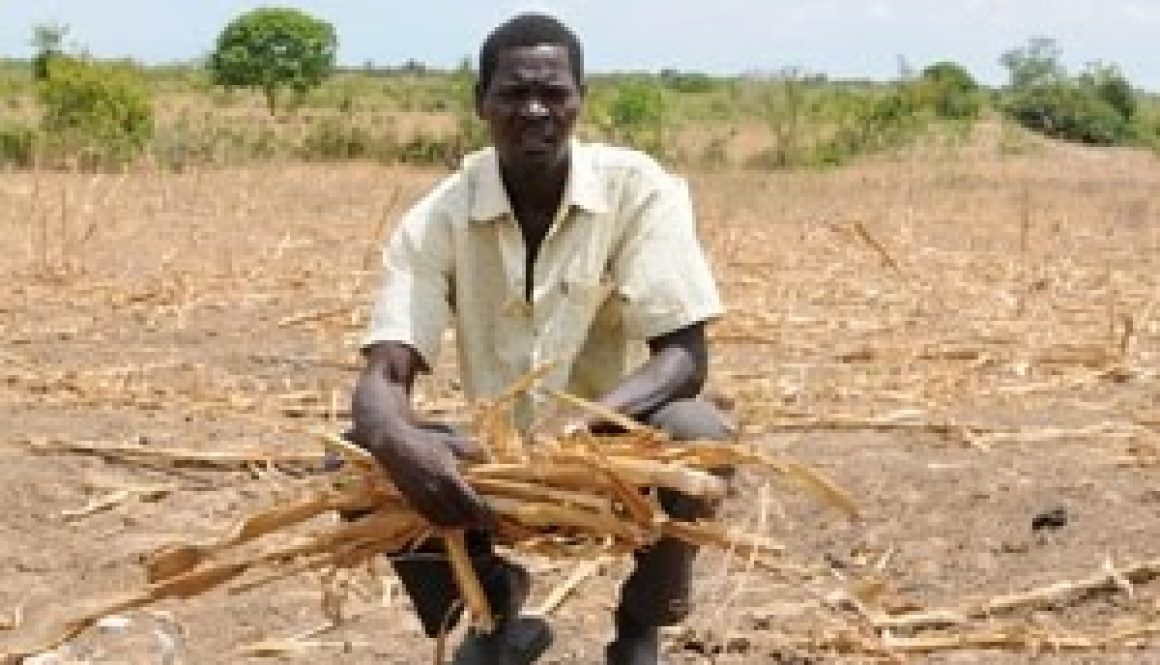 Maize shortage to affect 4 million Kenyans