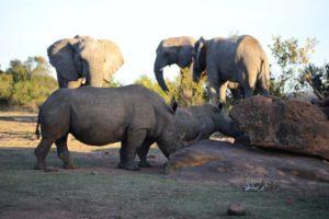 Safari en Súdáfrica